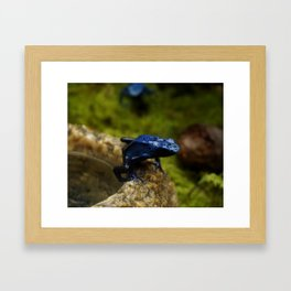 Blue Frog Framed Art Print
