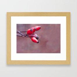 wild brier Framed Art Print