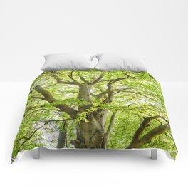 Beech Tree Comforters