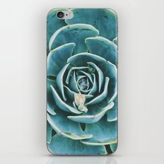 echeveria. succulent photo iPhone & iPod Skin