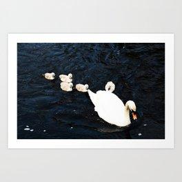 Cygnets on water Art Print