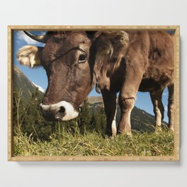 cute cow close Serving Tray