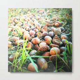 Don't go nuts! Metal Print