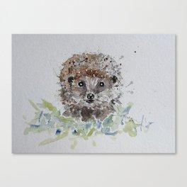 Hedgehog portrait Canvas Print