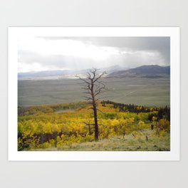 The past still stands tall in forest of  fall Art Print