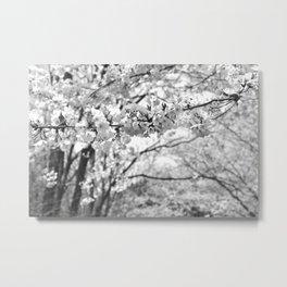Where The White Blossoms Grow Metal Print