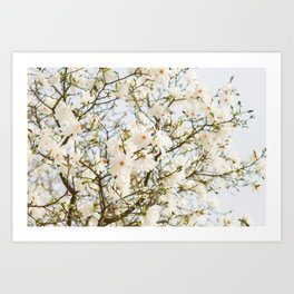 Under the Magolia Tree Art Print