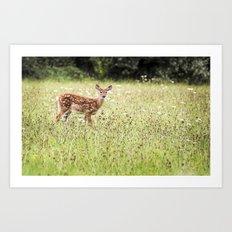 Dear Baby Deer  - Fawn Art Print