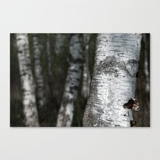birches II Canvas Print