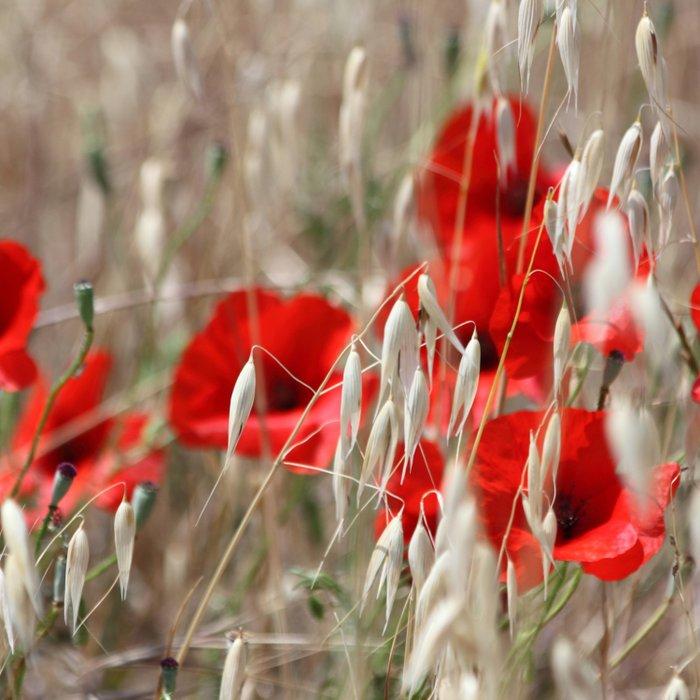 Poppies  - JUSTART © Duvet Cover