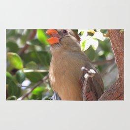 Female Cardinal Rug