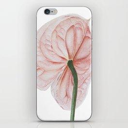 Pink Anthurium iPhone Skin