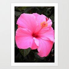 Hot pink Art Print