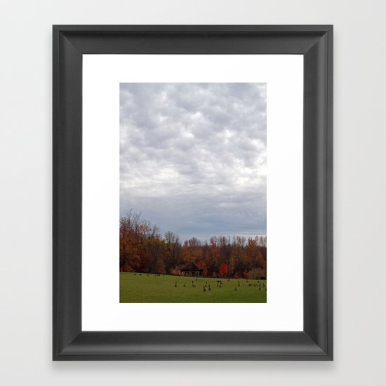 Geese in the Park Framed Art Print