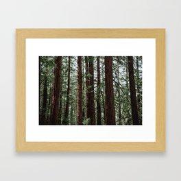 the woods. Framed Art Print