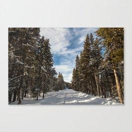 Yellowstone National Park - Grand Loop Road Canvas Print