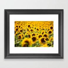 Through Fields of Light - Sunflowers Framed Art Print