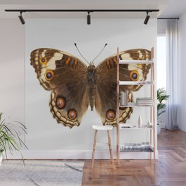 """Butterfly species Junonia orithya """"Eyed Pansy"""" Wall Mural"""