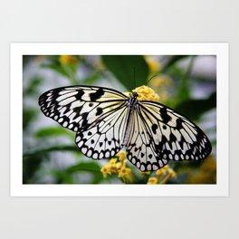 """""""Butterfly"""" Art Print"""