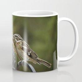 Grosbeaks Three Coffee Mug
