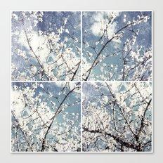almond mediterranean tree flowers collage Canvas Print