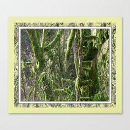 RAINFOREST VINE MAPLE TANGLE Canvas Print