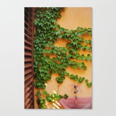 Ivy on the Terrace  Canvas Print