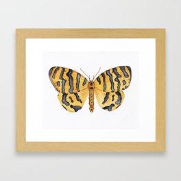 Beautiful Tiger Moth Framed Art Print