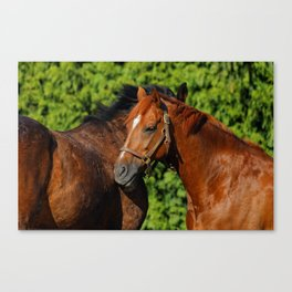 Lean on Me: Two Friends in the Summer Sun Canvas Print