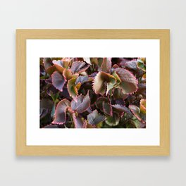 Color Tropical Framed Art Print
