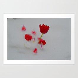 Vibrant Red Tulips In White Snow Art Print