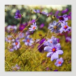 Flowering Cosmos Canvas Print
