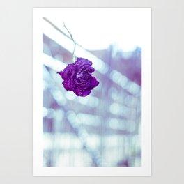 Old rose Art Print