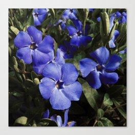 Wonderland Blue Canvas Print