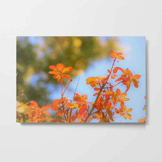 Autumnal Leaves Reaching Towards the Sun Metal Print