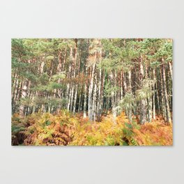 I have a room all to myself; it is nature Canvas Print