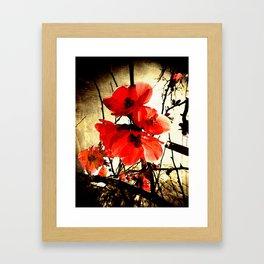 Spring Red 3, Royal Botanical Gardens - Melbourne Framed Art Print