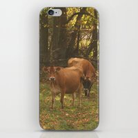 cows iPhone & iPod Skins featuring Cows by Ashley Callan