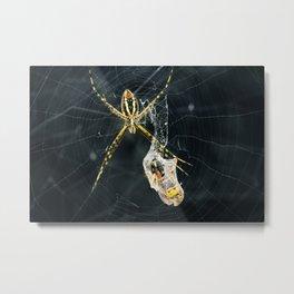 Yellow Garden Spider With Prey Metal Print