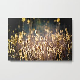 Morning in the Cattails Metal Print