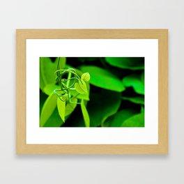 Nature's Twist Framed Art Print