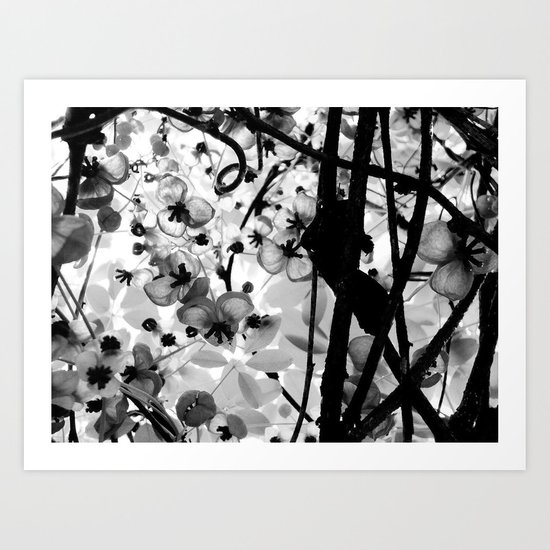The Chocolate Vine Art Print