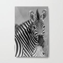 Zebra B&W Metal Print