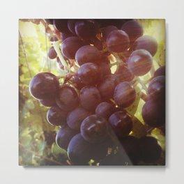 Grapes on the Vine Metal Print
