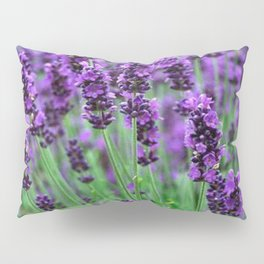 Lavender colors... Pillow Sham