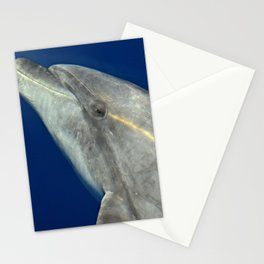 Bottlenose dolphin portrait Stationery Cards