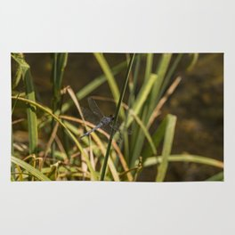 Dragonfly in the marsh Rug