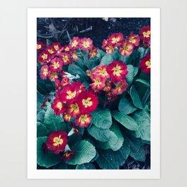 Pretty Little Red & Yellow Flowers Art Print