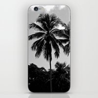 puerto rico iPhone & iPod Skins featuring Palm Trees Puerto Rico by Derek Delacroix