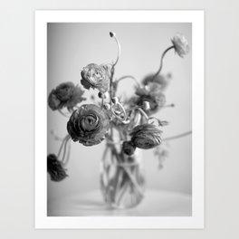Ranunculus, black & white Art Print